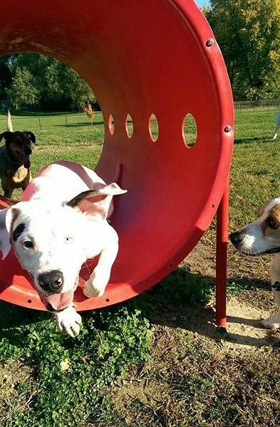 Rotary Dog Park in Belleville Illinois' Franklin Neighborhood